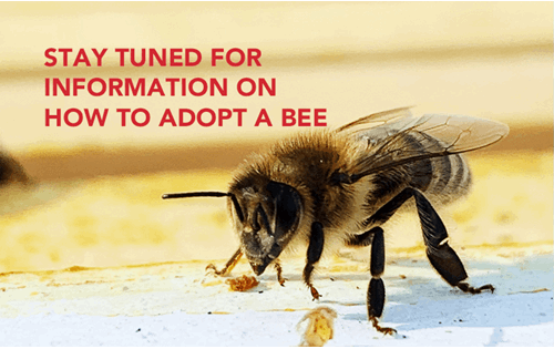 "A close-up of a fuzzy bee with text reading ""stay tuned for information on how to adopt a bee"""